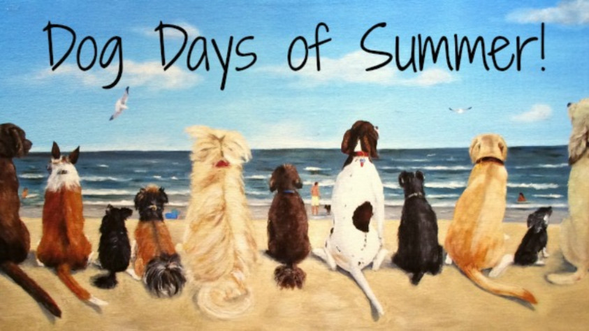 It's about summer, it's about DOG DAYS...