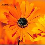 Sanu-chan profile image