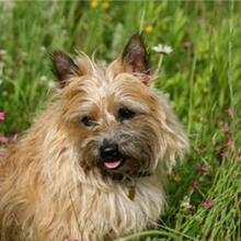 Agatha profile image