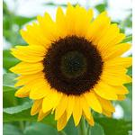 sunzbery profile image