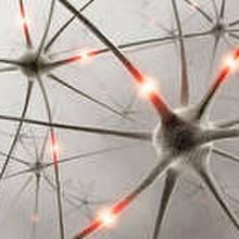neuron600 profile image