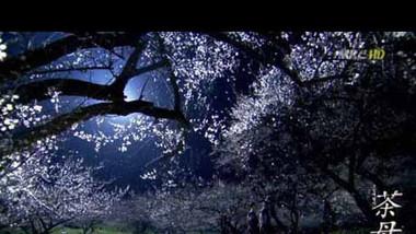 Damo Trailer: Damo