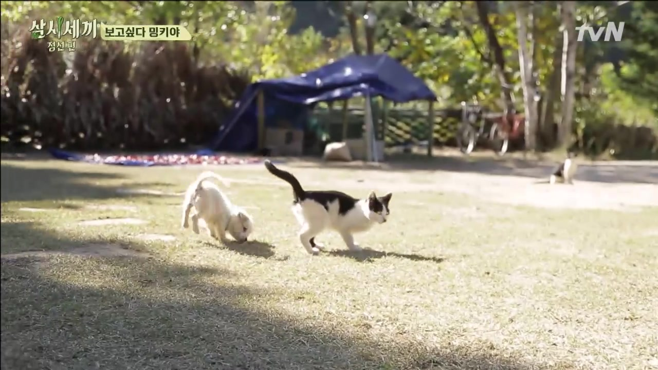 Three Meals a Day in Jung Sun Episode18 Part3: Three Meals a Day in Jung Sun Highlights