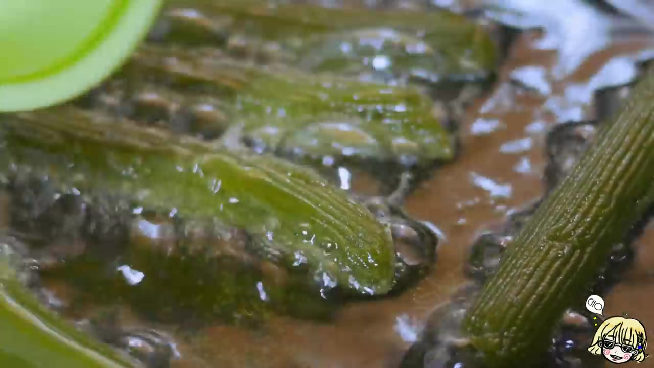 Cho's Daily Cook Episode 4: No-Oven Cream Cheese Green Tea (Matcha) Churros