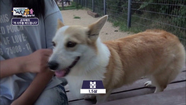 Dog Star TV Episode 4