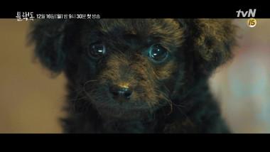 Highlights 2: Black Dog